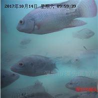 OWL-SMART-W1鱼虾养殖水质在线监测系统设备超标自动报警