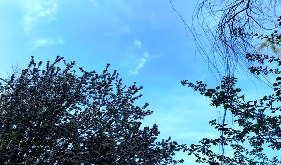 《廣西2020年冬季—2021年春季大氣污染綜合治理攻堅行動方案》印發